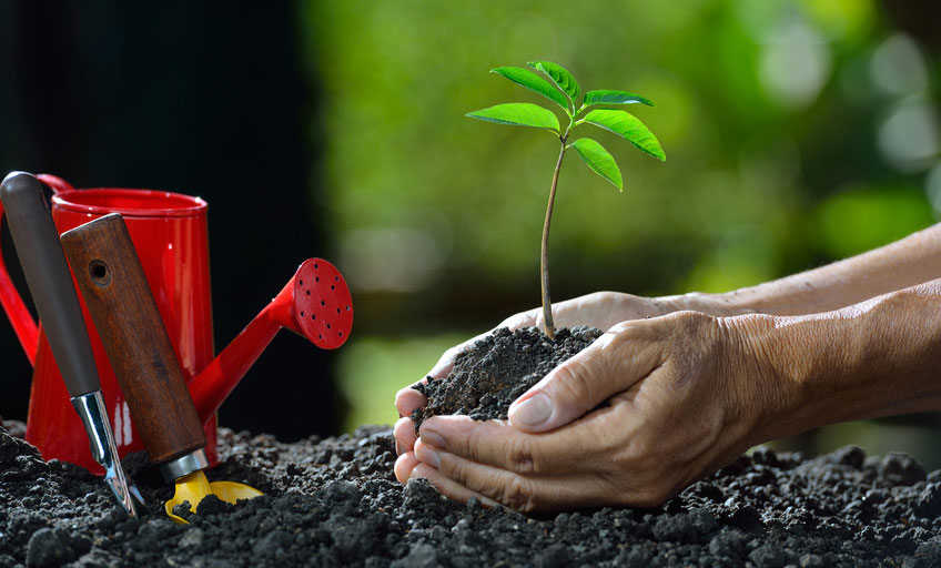 Begleiteter Praxistransfer für nachhaltige Personalentwicklung